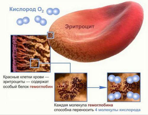 Эритроцит