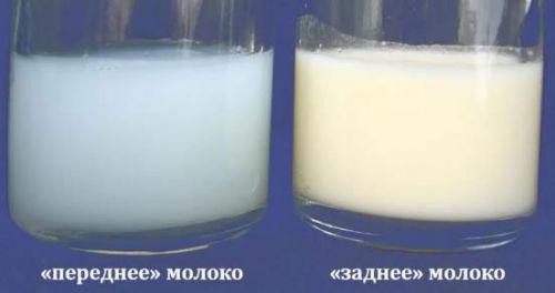 Переднее и заднее грудное молоко