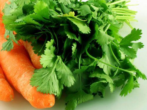 Кинза и морковь