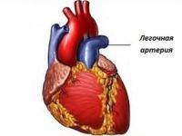 Легочная артерия