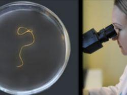 Гельминты под микроскопом
