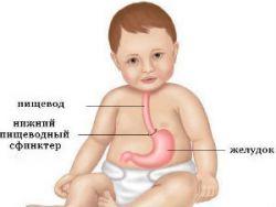Органы пищеварения у ребенка